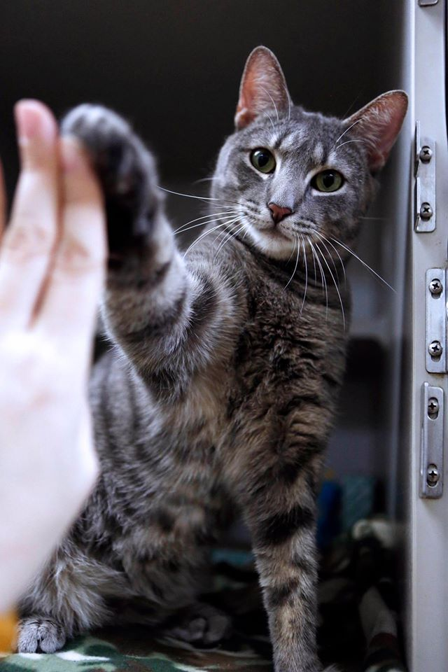 Cat Pawsitive - Flickers High-Five