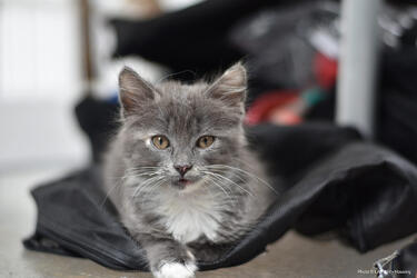 kitten laying on a good pack