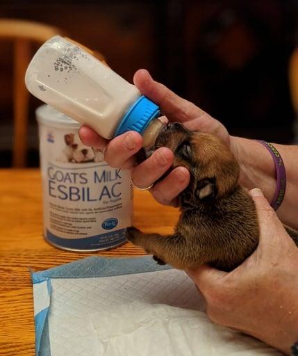 kansas city pet project puppy bottle feeding coronavirus response