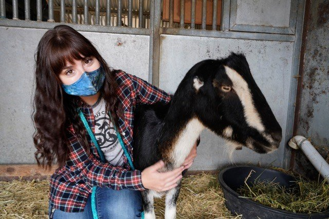Female shelter worker poses with rescued goat in a barn stall. She is wearing a face mask for COVID-19.