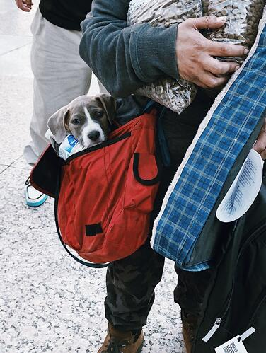 Small Dog in Bag of Person Holding Good Pack and Supplies at 4-12-21 Street Dog Coalition Event_©Nashville Humane Association