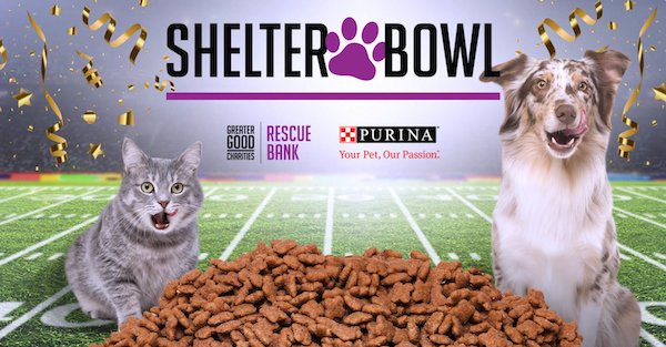 Shelter Bowl 2021: YOU are the Champion for Pets in Need!