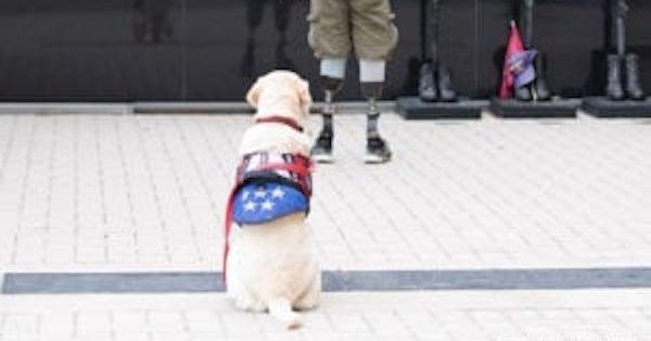 Celebrate Assistance Dog Day by Providing Pets to Vets