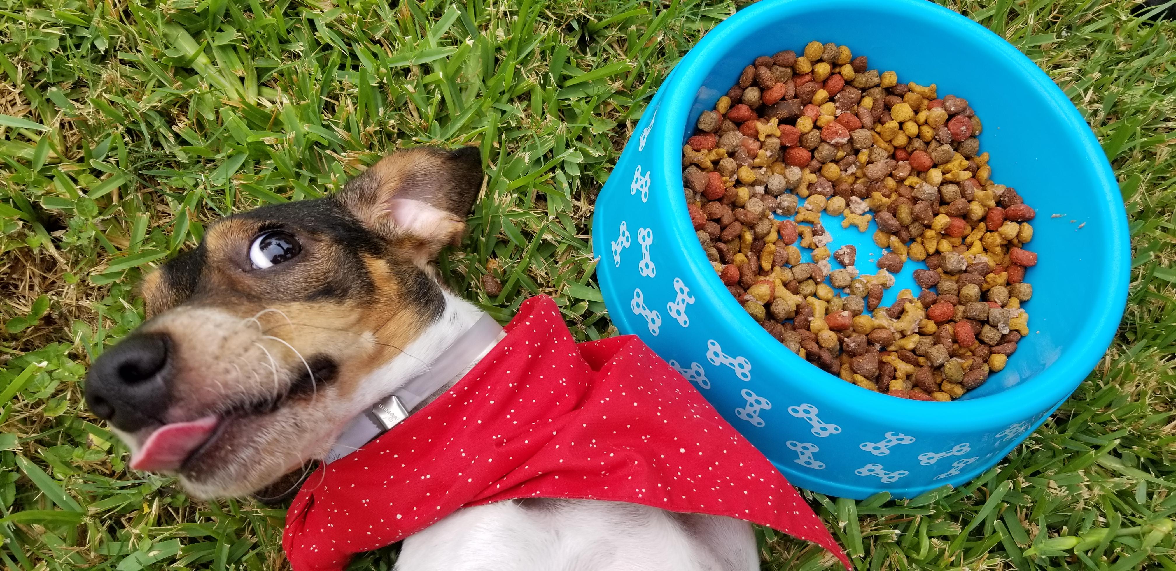 Alice on Grass with Food Bowl 6_©Houston Humane Society_NFARPW 2020-1