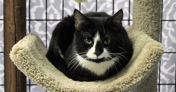 Cat Pawsitive Pro to Foster Positive Changes for Shelter Cats and the People Who Care for Them