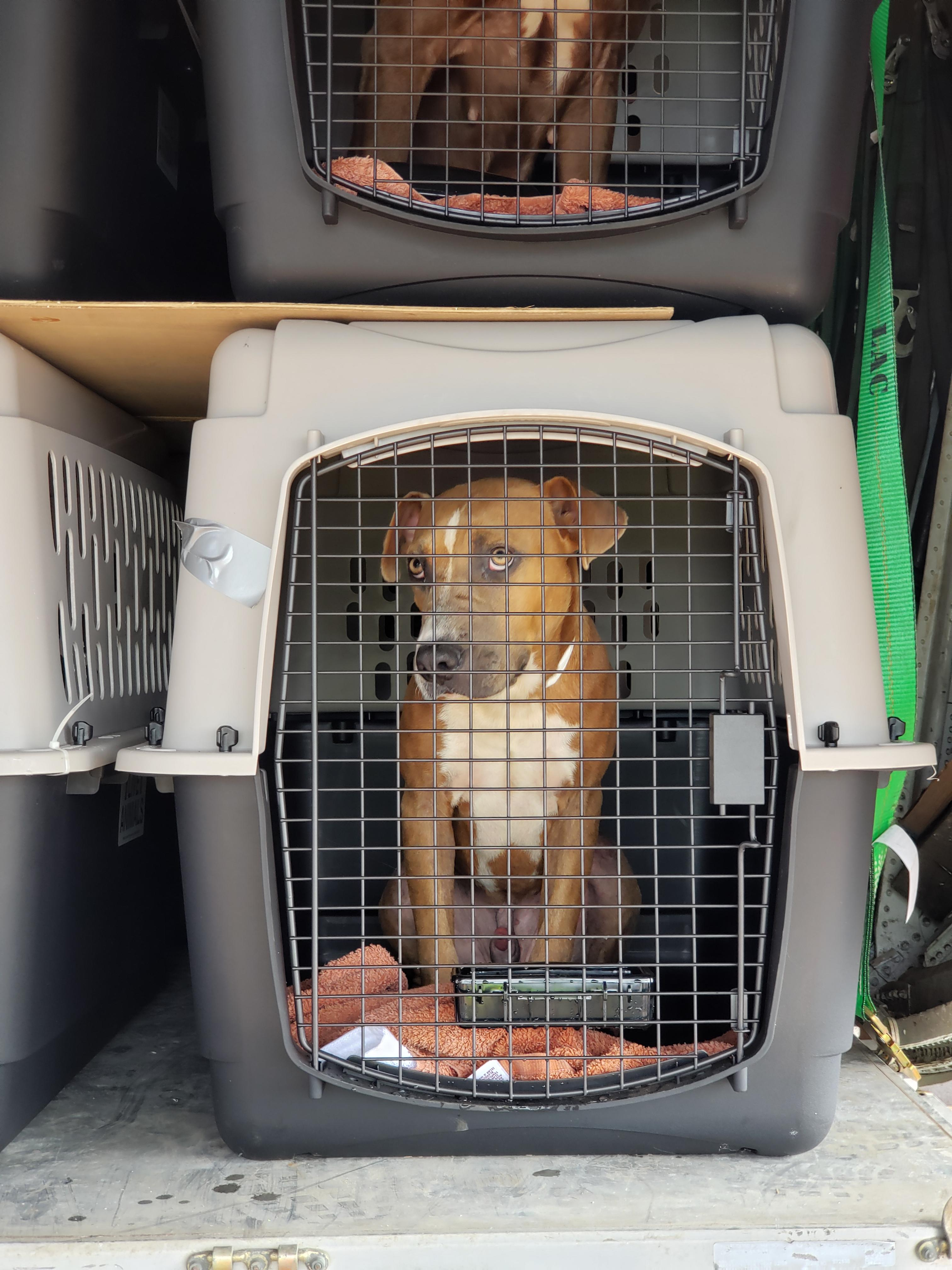 Brown Dog in Crate on C-130 in Kauai 10-28_©Greater Good Charities_PawsXPacific