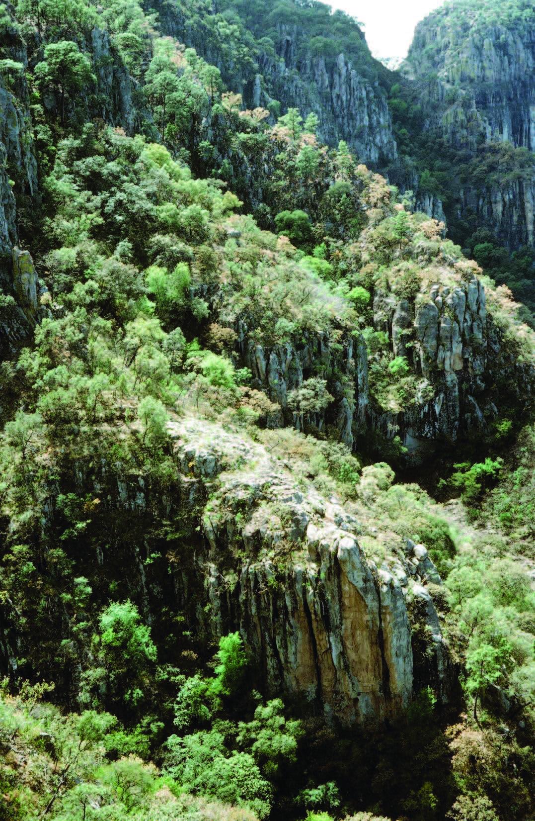 Chiococca-grandiflora-new-mexico