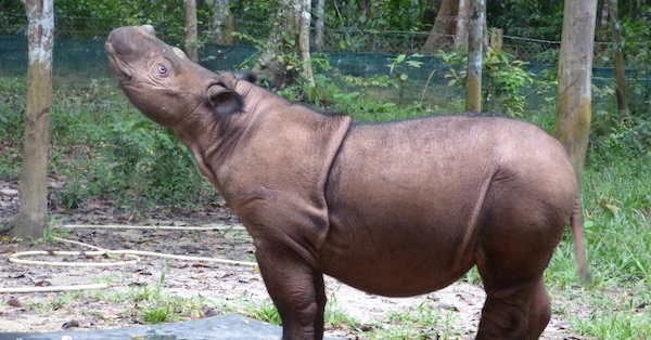 Hey There, Delilah: A Rhino's Story
