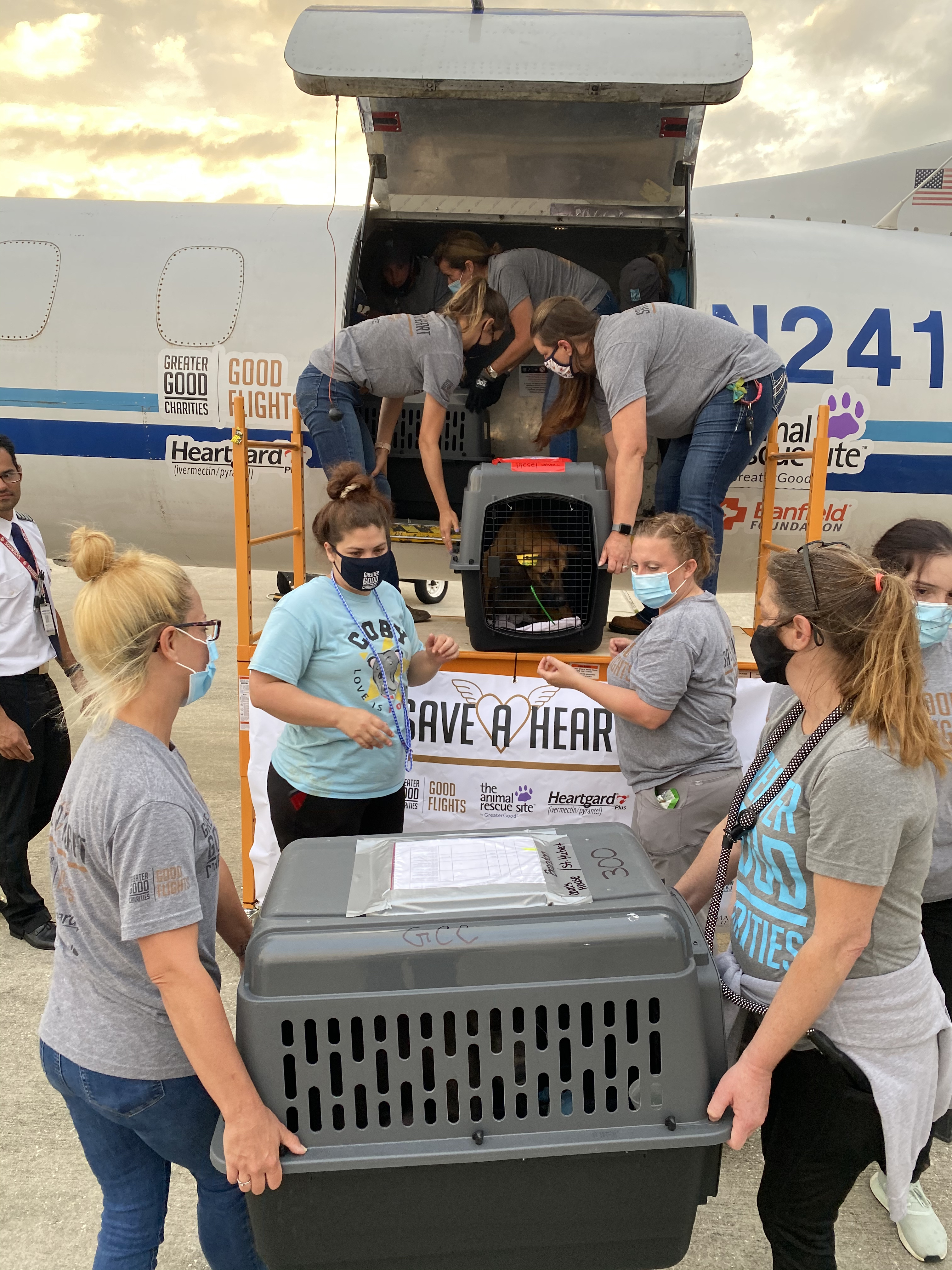 Diesel Loaded on Plane_©St. Charles Parish Animal Shelter_GF SAH 5-17-21