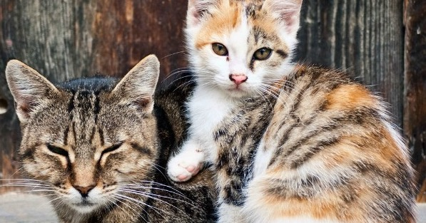 Humanely Regulating the Feral Cat Population