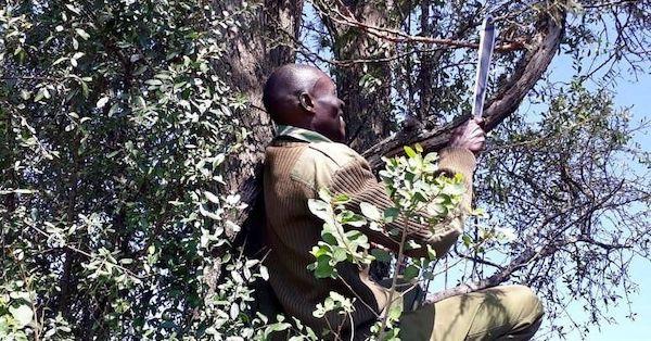 Anti-Poaching Efforts in Maasai Mara, Kenya