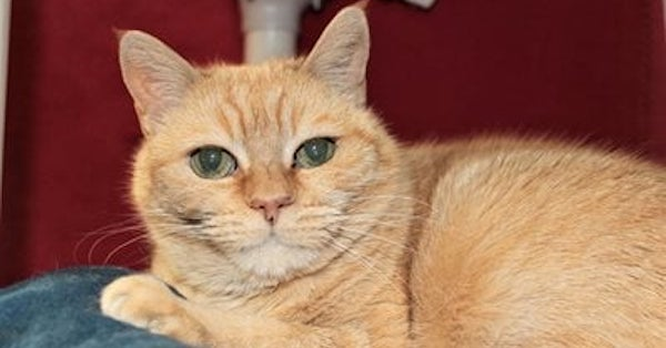 Superstar Cat Emerges at Purrfect Pals Thanks to Cat Pawsitive Pro