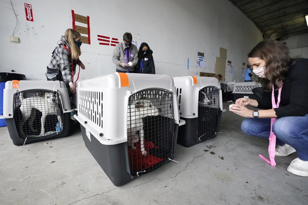 Hundreds-of-shelter-dogs-cats-flown-across-the-Pacific