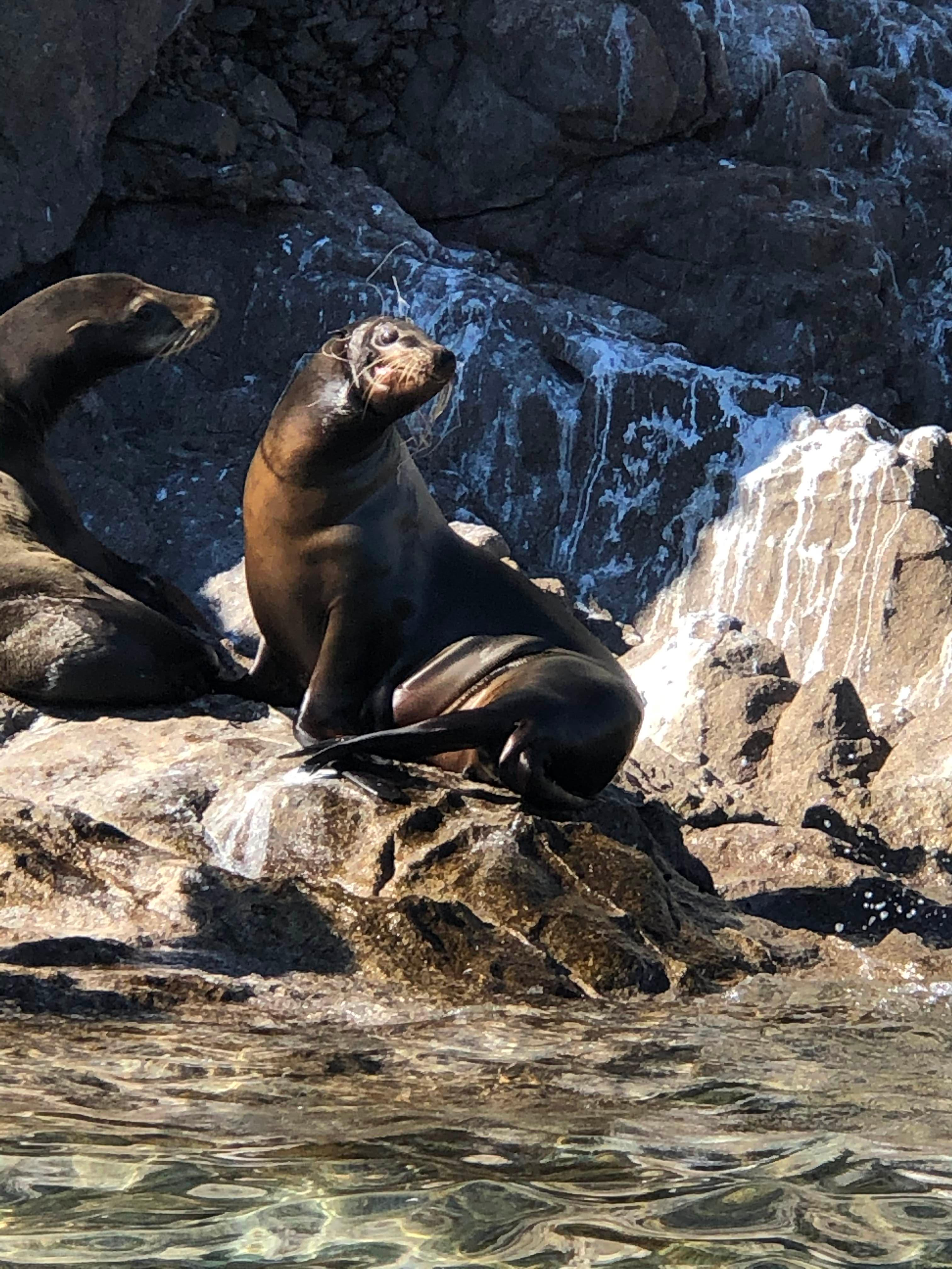 Sea Lion tangled in fishing line.