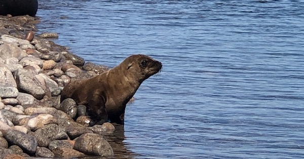 Protecting the Sea Lions