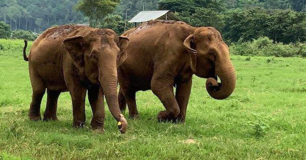 A Perilous Elephant Rescue