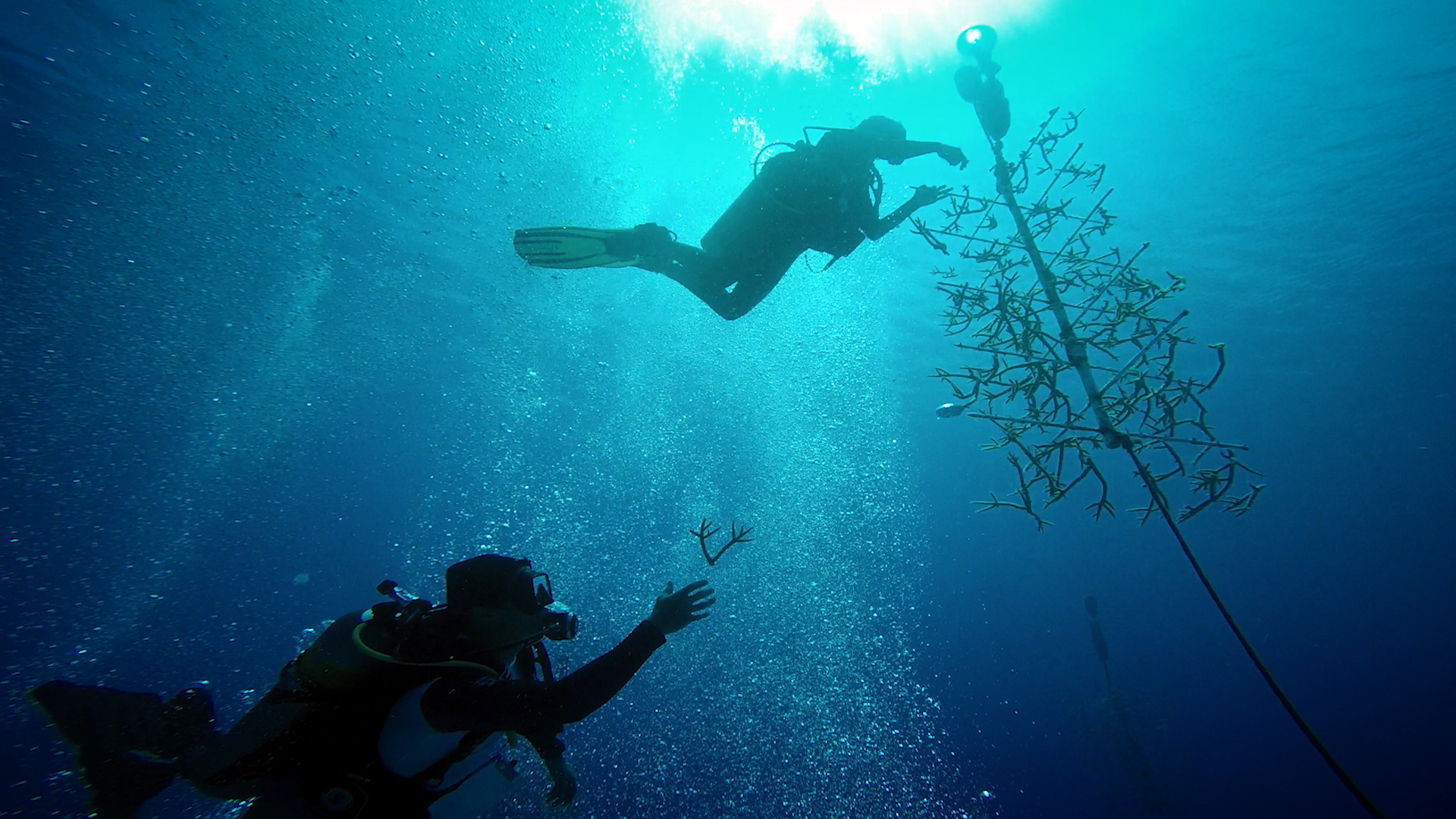 Vets Diving to Save our Reefs