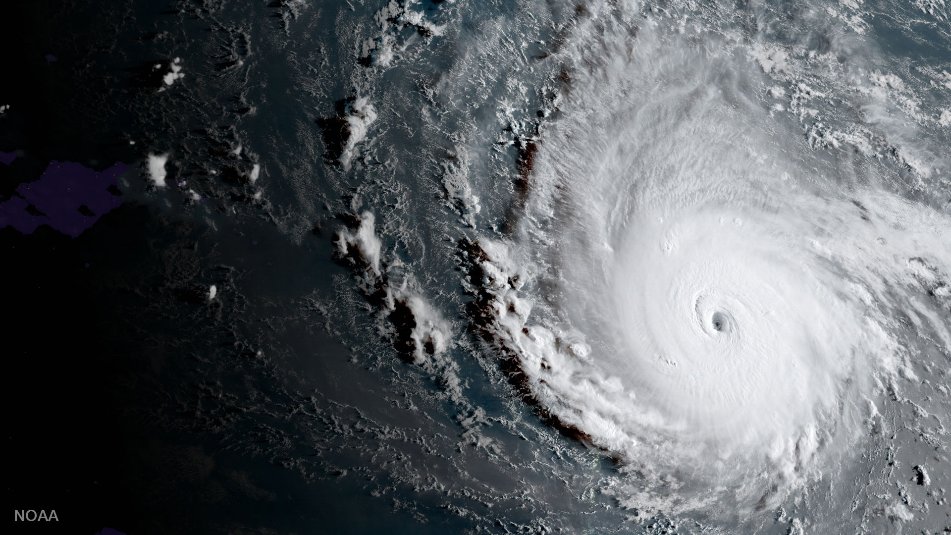 URGENT: Hurricane Florence Pounding Pets and People – You Can Help
