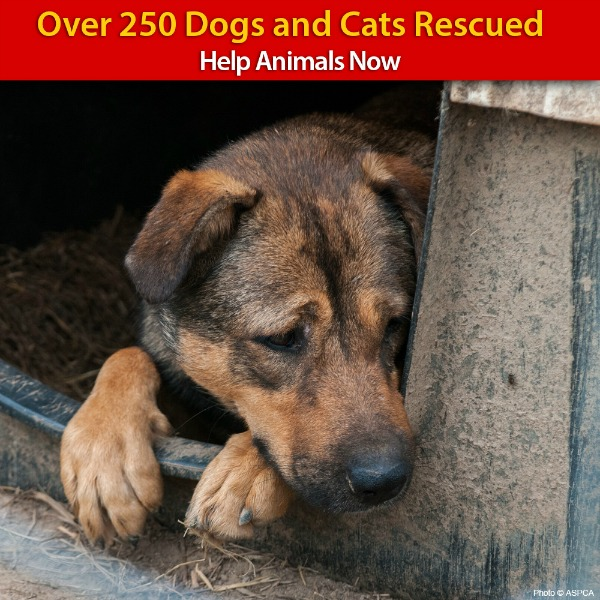 Urgent Need for 250 Dogs and Cats Rescued from Extreme Neglect
