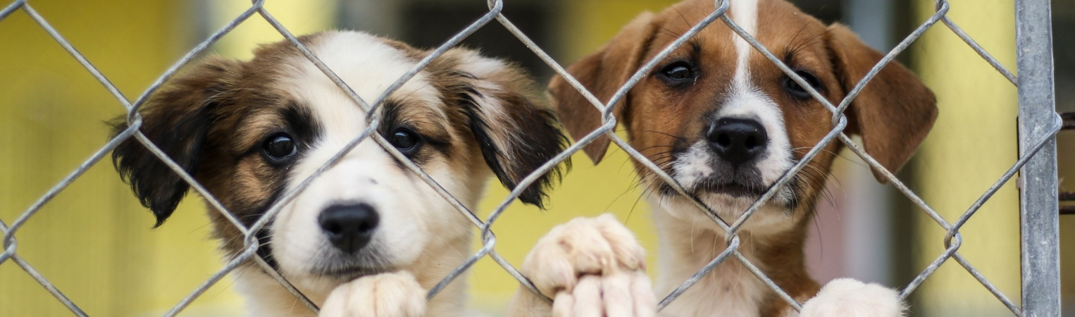 Rescue Rebuild Partners with PetSmart Charities® to Renovate Shelter Ravaged by Hurricane Dorian