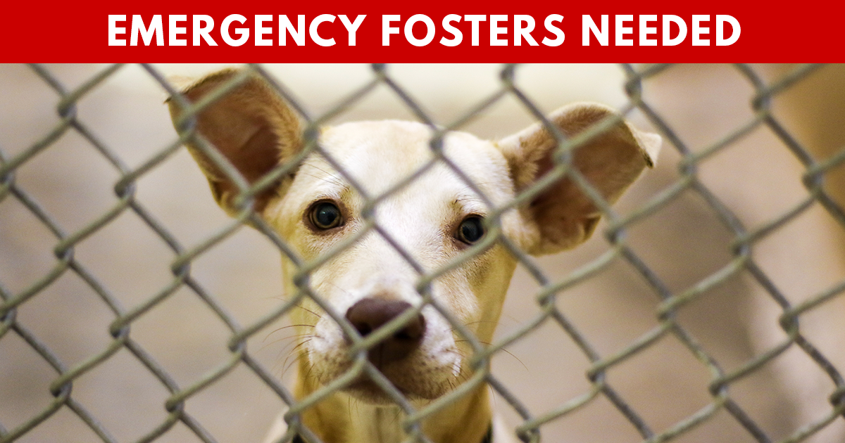 Pets Rely on Foster Families During Pandemic