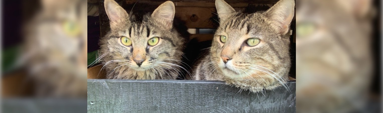 Mellow Fellow & Fuzzy: Two Cats' Journey Home