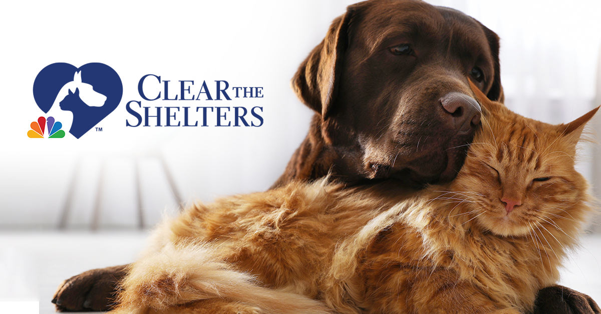 Clear the Shelters Goes Virtual, Helps 130,000 Pets Find New Homes