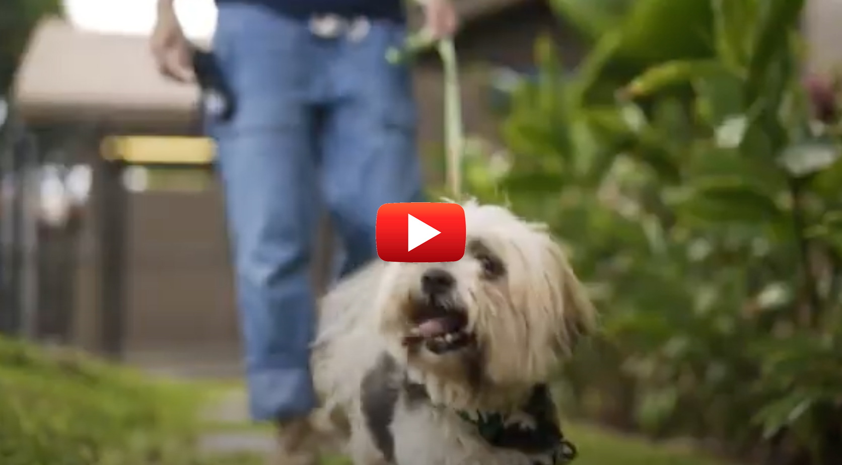WATCH: Paws Across the Pacific, a Historic Pet Rescue Mission