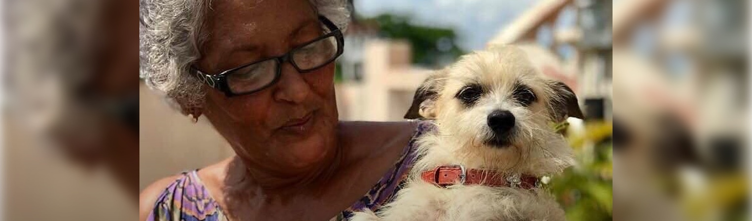 Long After Hurricane, Greater Good Charities Continues Helping Puerto Rico Pets