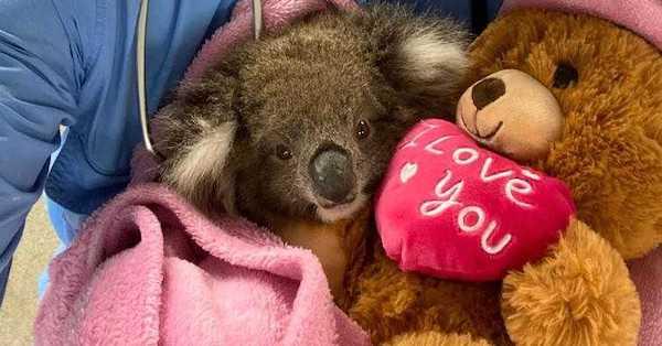 Australian Wildlife on the Mend