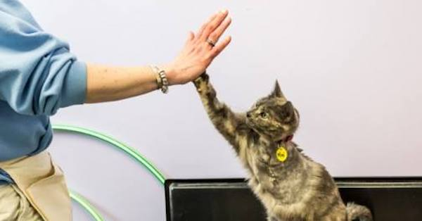 Thank You for Helping So Many Cats Get Adopted This Year Through Our Cat Pawsitive Program!