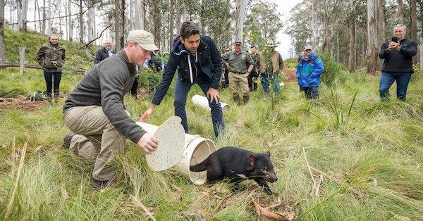 New Wildlife Sanctuary Brings Hope for Endangered Tasmanian Devils!