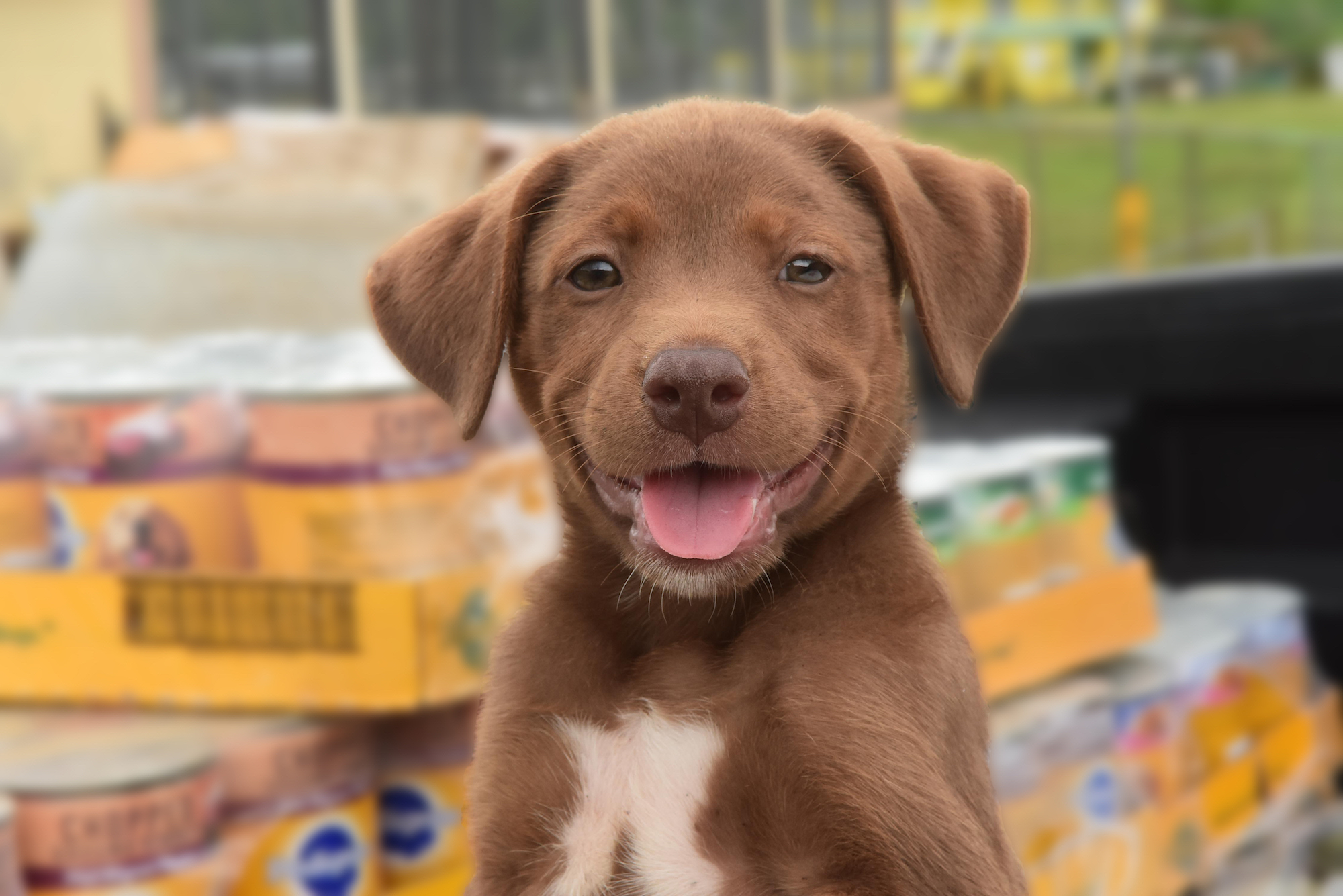Smiling puppy sitting in front of pallets of food donated to Greater Good Charities' Rescue Bank program.