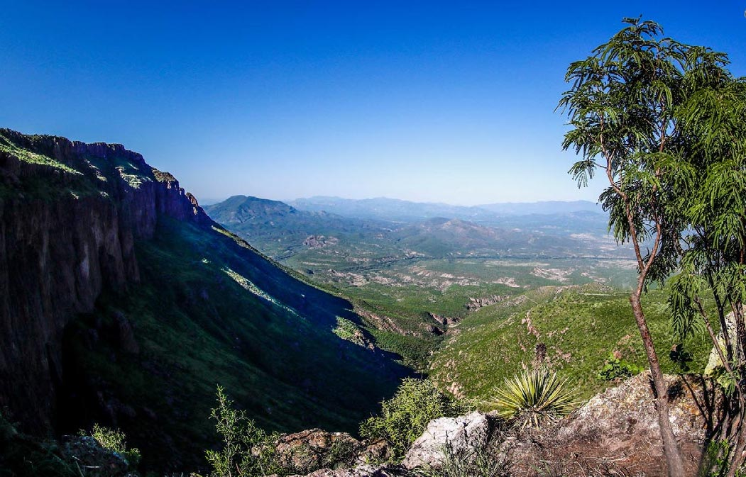 Preliminary-Flora-Lower-Bavispe-Valley-Sonora-Mexico