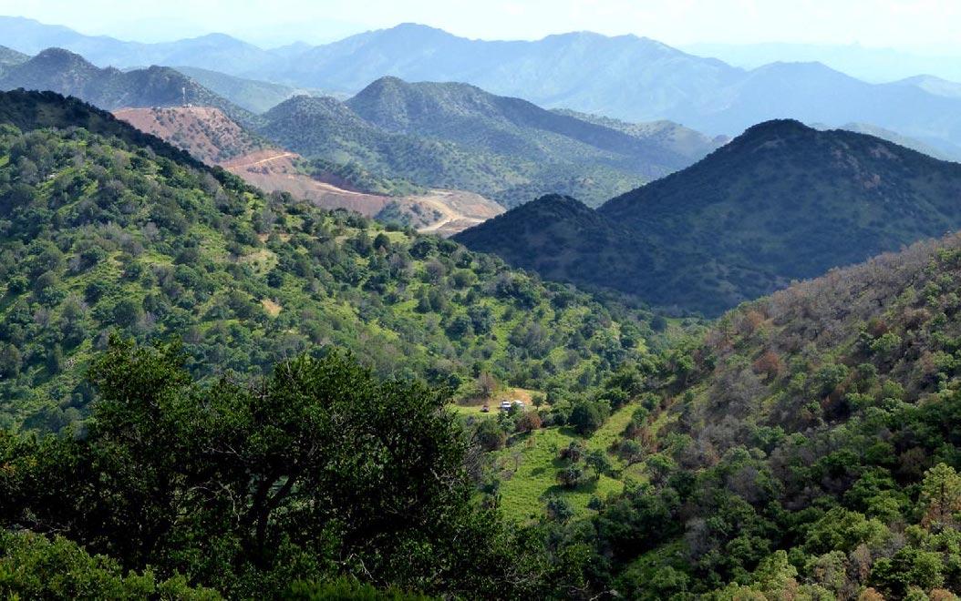 Preliminary-Flora-Sierra-Juriquipa-Sonora-Mexico