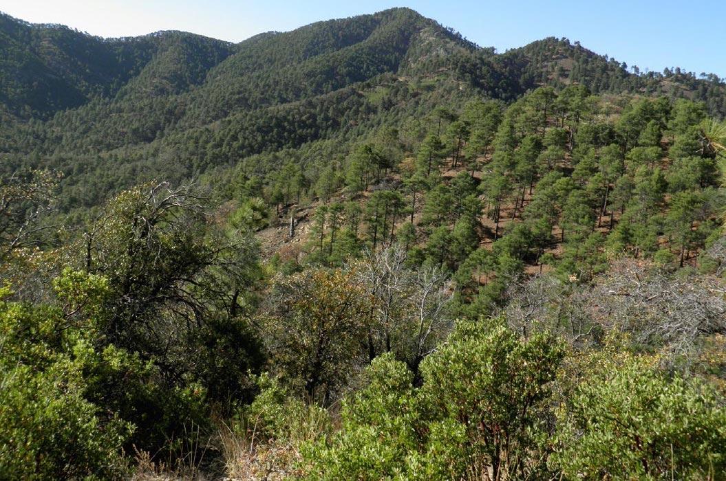 Preliminary-flora-vegetation-sierra-la-elenita