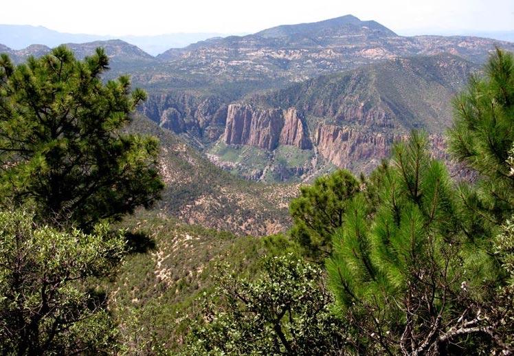 Preliminary-floras-Madrean-Archipelago-Sonora-Mexico