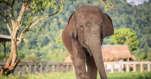 From Dogs to Elephants: Protecting Animals with a Rough Past