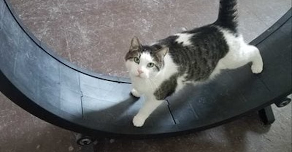 Happy Tales Ranch and Rescue Loved Learning How to Make Cats More Adoptable
