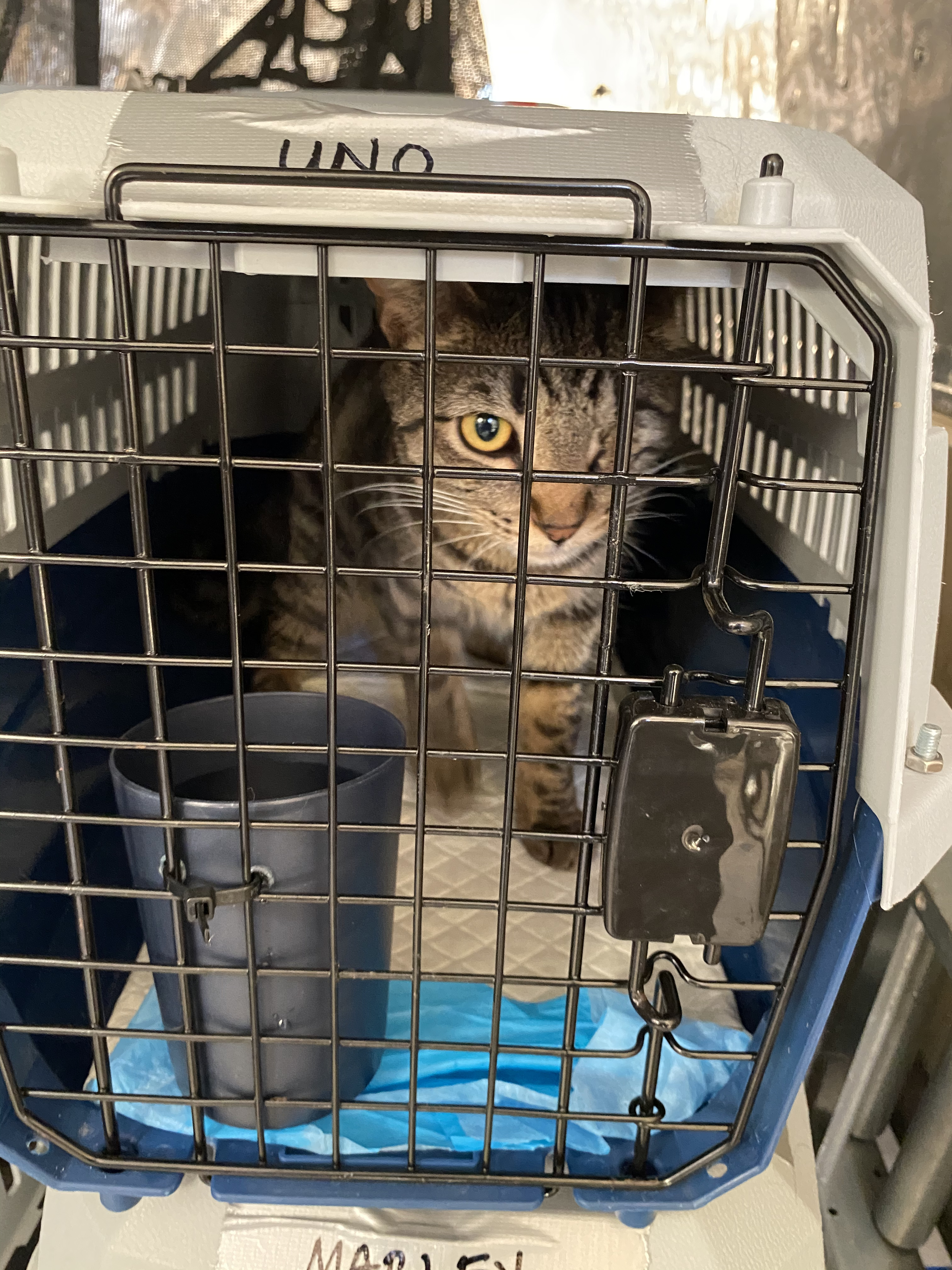 Uno in Crate on Plane_©Greater Good Charities_GF iHC