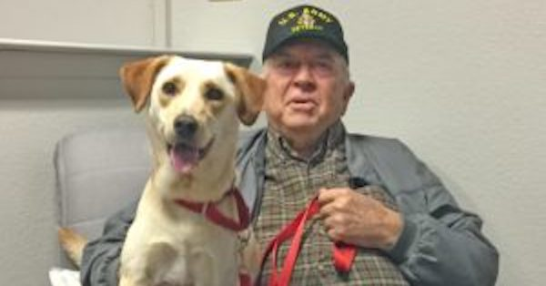 Five More Therapy Dogs Graduated and Placed With Veterans!