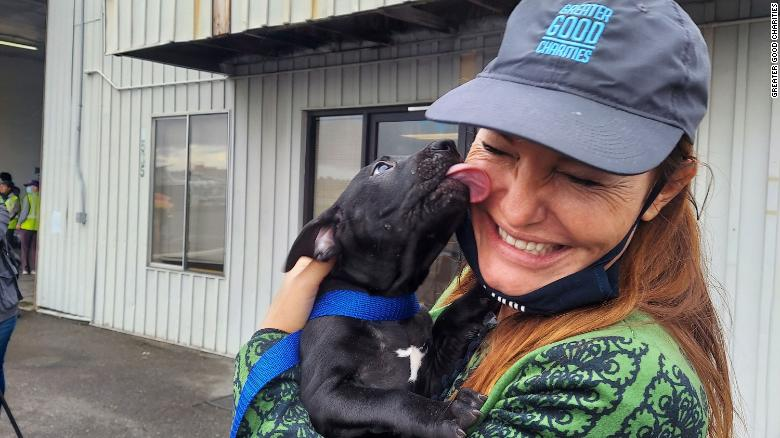 more-than-600-dogs-and-cats-to-be-put-up-for-adoption